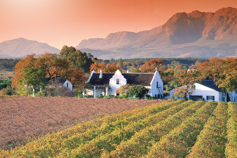 Weingut am Kap (© Foto: South African Tourism Board, City of Capetown)