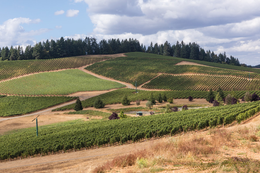 Idyllische, authentische Landschaften am South Willamette Valley Food Trail... (© Foto: Travel Oregon, Joni Kabana)